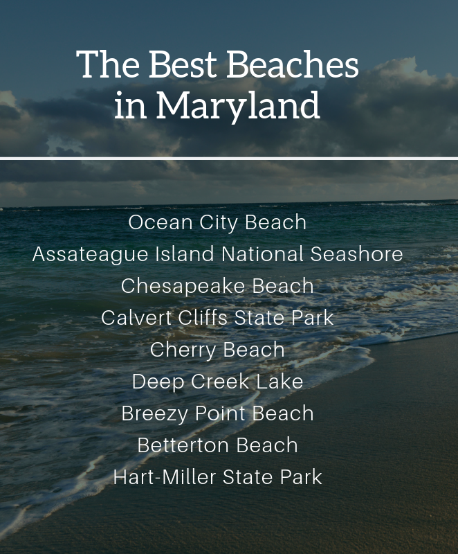 Infographic Showing the Best Beaches in Maryland